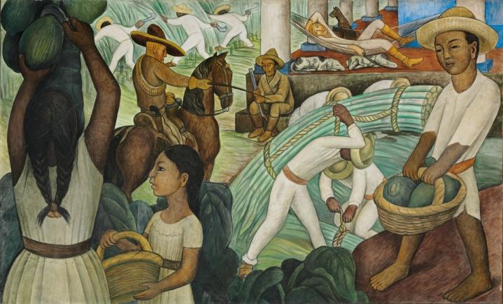 sugare cane Rivera.jpg