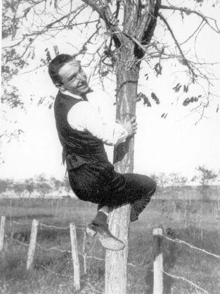 depero albero acqua acetosa