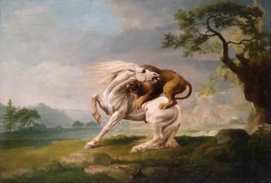Un leone attacca un cavallo